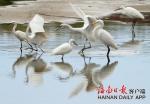 海南乐东莺歌海盐场湿地鸟类户口调查:82种约3000只 - 海南新闻中心