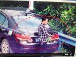 监控下用树叶遮挡号牌 男子被记12分罚千元 - 海南新闻中心