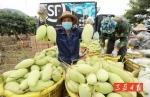 买它,买它,买它!三亚市长变身网络主播,果园直播卖芒果 - 海南新闻中心