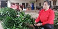 海口美兰区大致坡镇开启复工复产模式助力村民经济增收 - 海南新闻中心