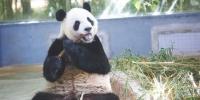 海南热带野生动植物园上百种动物这样消暑 - 海南新闻中心