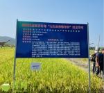 """516个新品种水稻!三亚水稻公园上演""""水稻秀"""" - 海南新闻中心"""