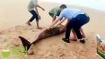 文昌一幼鲸搁浅海滩,警民合力救援让它重归大海! - 海南新闻中心