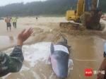 一头小抹香鲸在文昌海滩搁浅 已被送往陵水救治 - 中新网海南频道